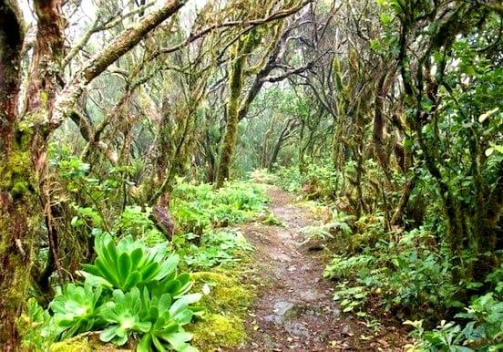 Enchanting laurisilva forest of Anaga