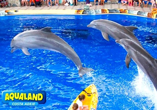 Dolphin show in Aqualand Tenerife