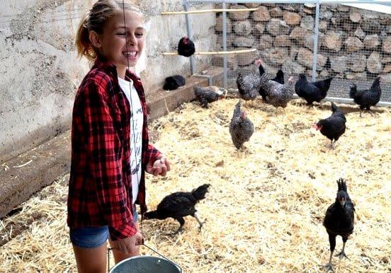 Chickens at La Granja Verde in Tenerife