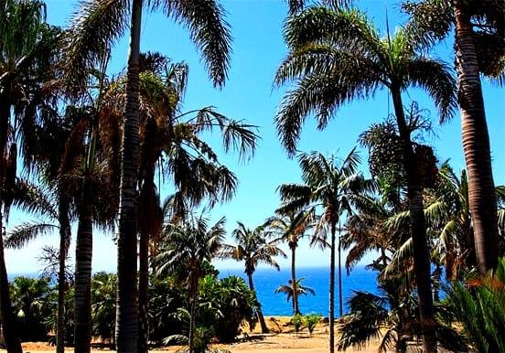 Trees at Palmetum Botanical Garden in Tenerife