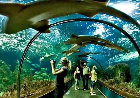Shark tunnel Loro Parque Puerto de la Cruz
