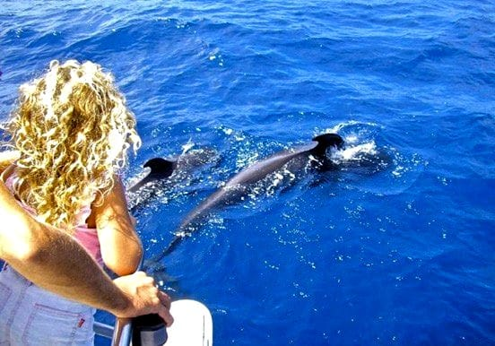Tenerife whale and dolphin watching