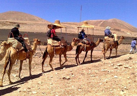 Camel tour in Lanzarote