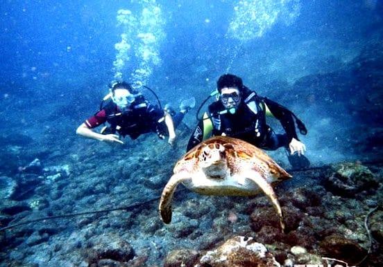Scuba Diving Taster Tenerife