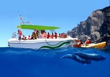 Kayaking and whalewatching Los Gigantes