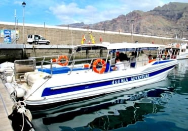 Spot dolphin with speed boat Los Gigantes