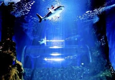 Shark diving in Aquarium Lanzarote