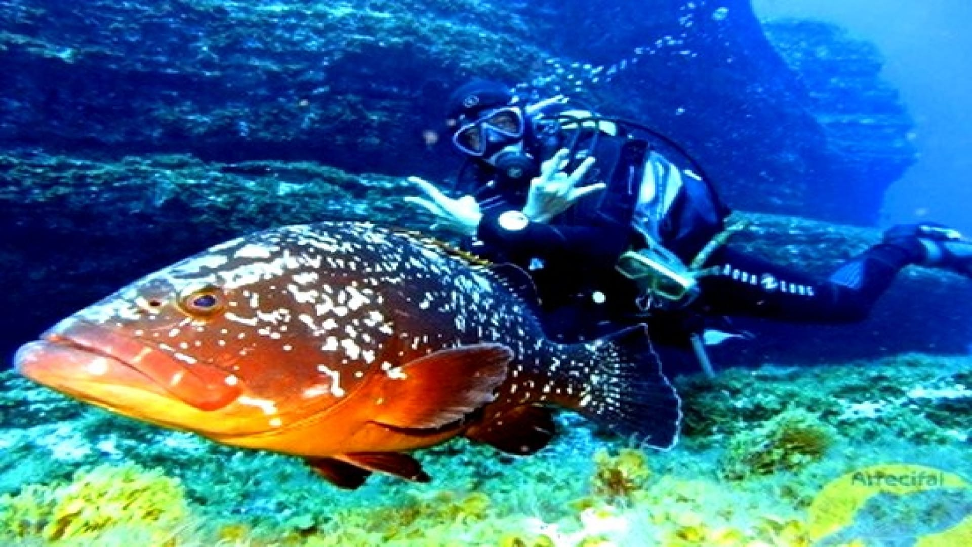 Diving in the impressive underwater of el hierro