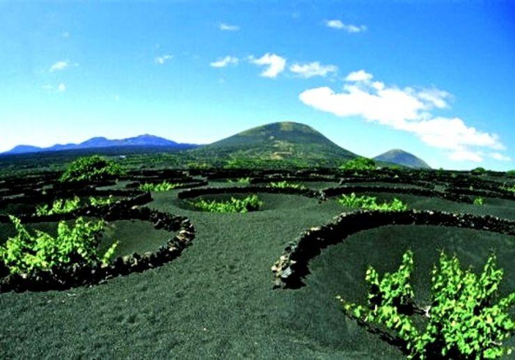 Wine plantation in La Geria