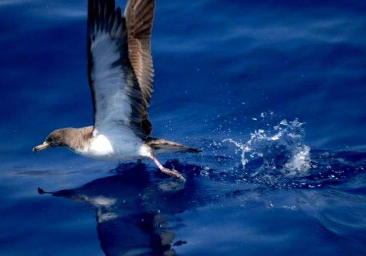 Sea bird Loa Gigantes boat excursion