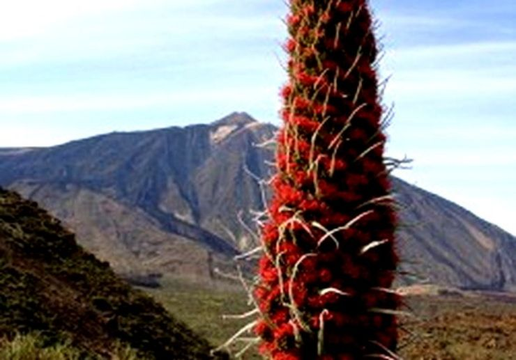 Hiking tour in Mount Teide