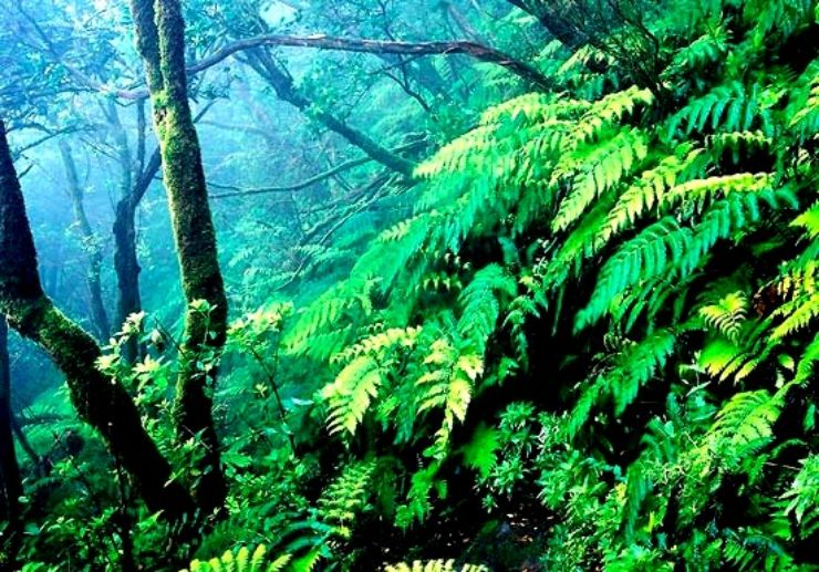 Anaga lauril forest of Tenerife