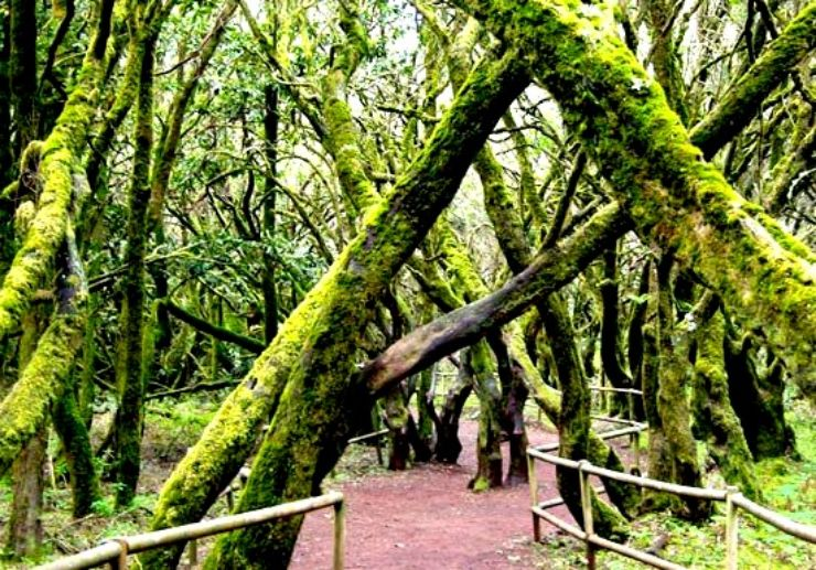 The forest of Garajonay National Park