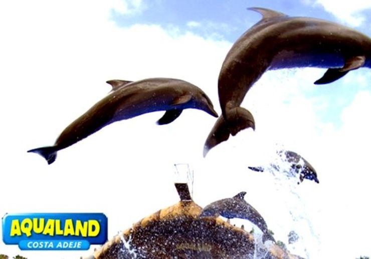 Aqualand dolphins show