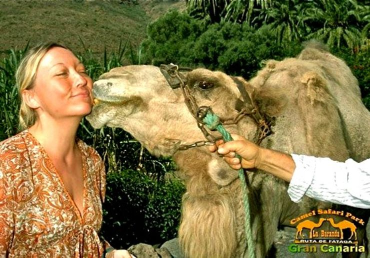 Camel kissing in Gran Canaria