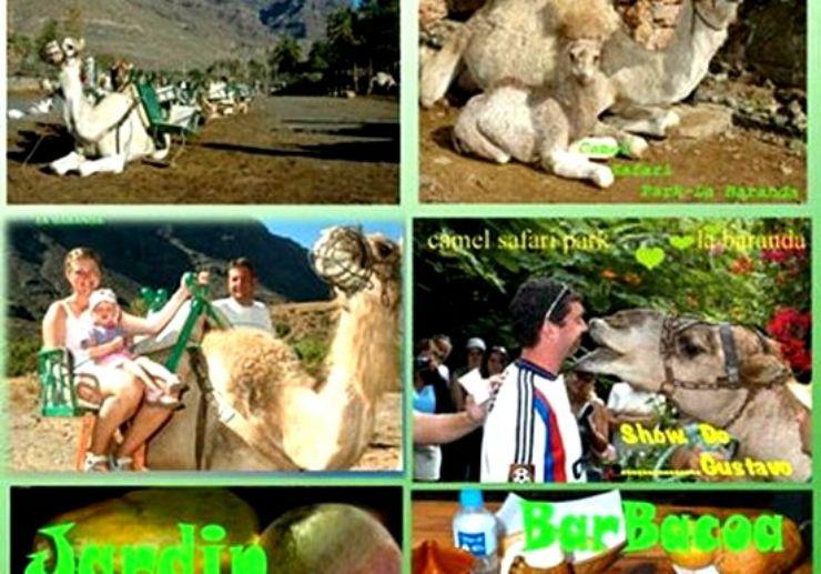 Camel Safari Park in Gran Canaria