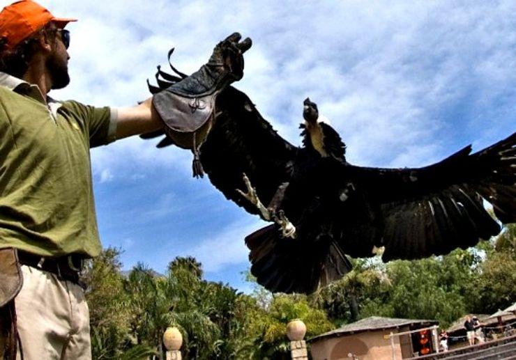 Bird of prey show at Tenerife Jungle Park