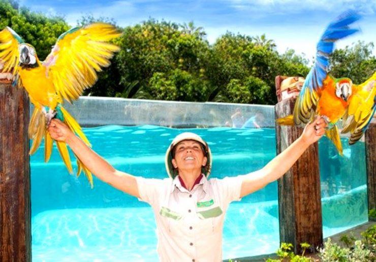 Tenerife Exotic bird show at Jungle Park