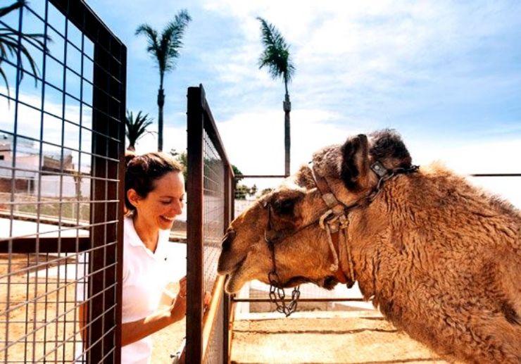 Camel ride at La Granja Verde in Tenerife
