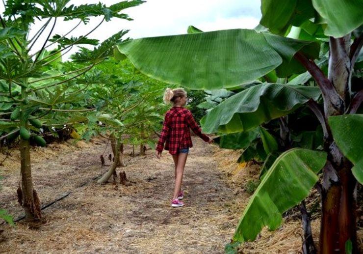 Fruit orchard at La Granja Verde in Tenerife
