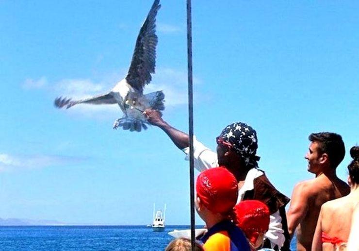 Eagle feeding onboard catamaran sailing