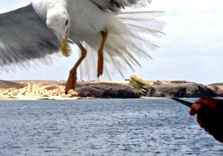 Eagle feeding onboard catamaran trip