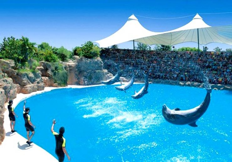 Dolphin show at Loro Parque dolphin Tenerife