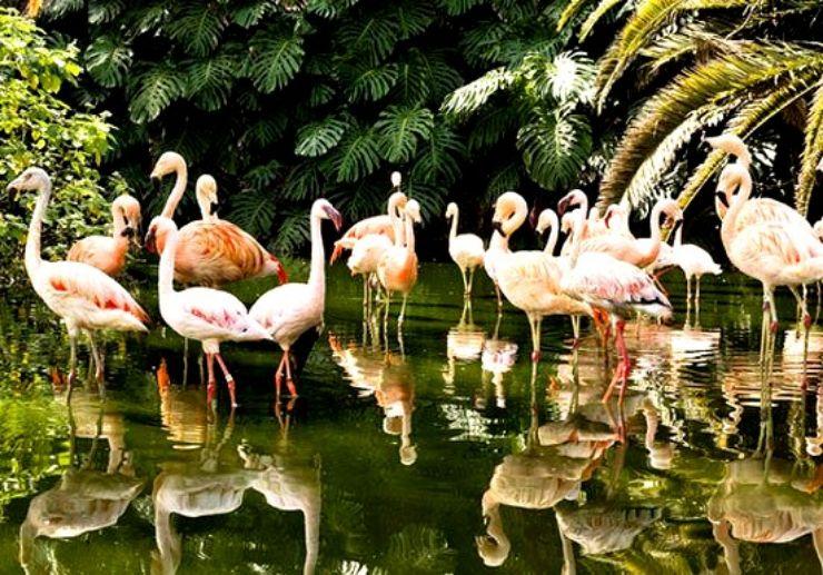 See pink flamingos in Loro Parque