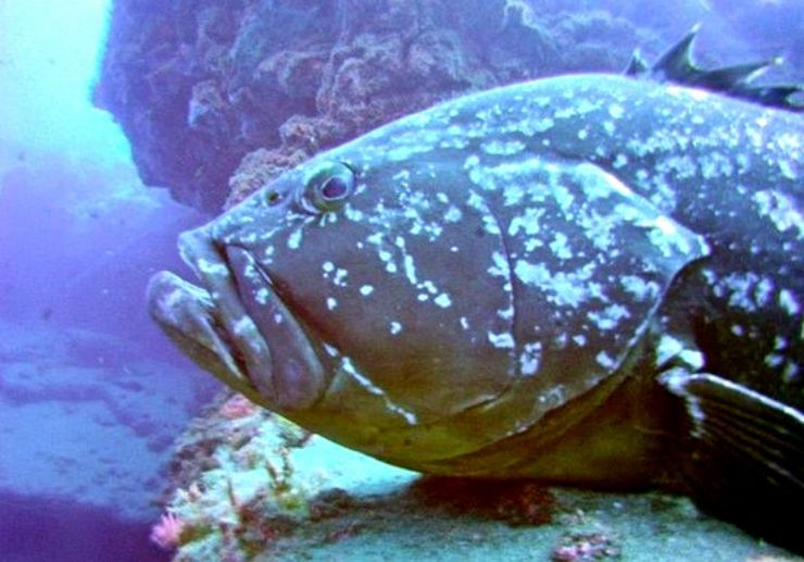 See marine life diving in Lanzarote