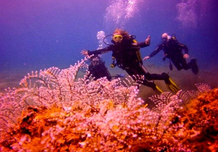 Open water diving in Lanzarote Puerto del Carmen