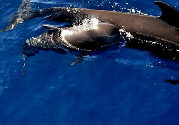 Whale and dolphin watching trip La Palma