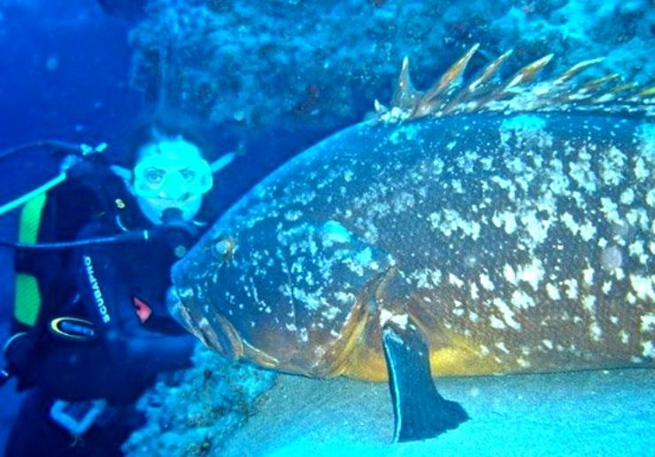 Lanzarote diving and discovering