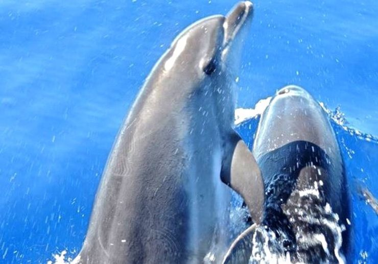 Dolphin watching in La Palma
