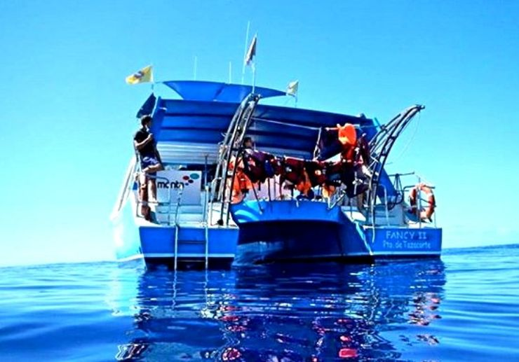 Catamaran whale watching trip in La Palma