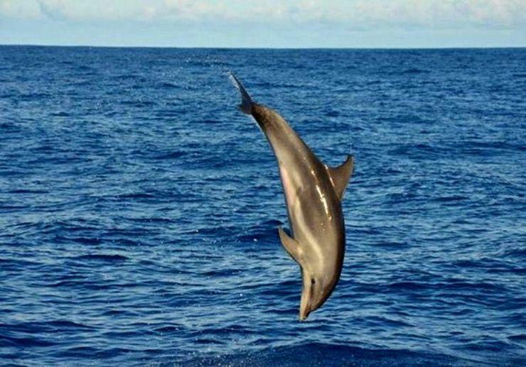 Spot dolphins in La Palma boat trip