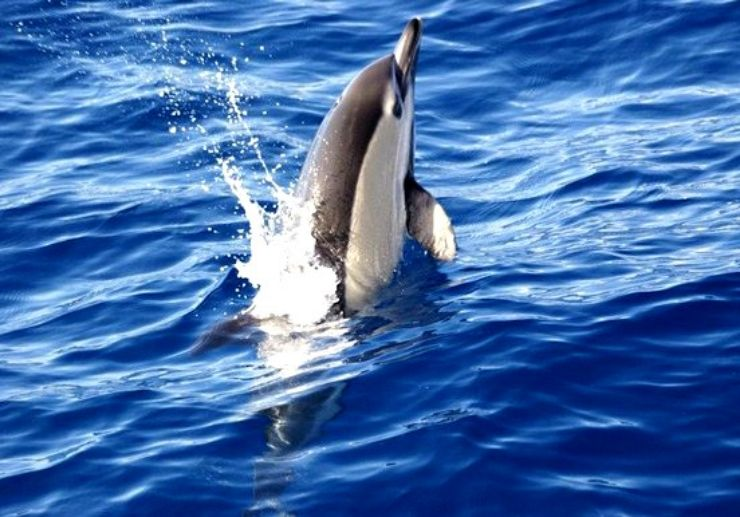 La Palma dolphin and whale watching
