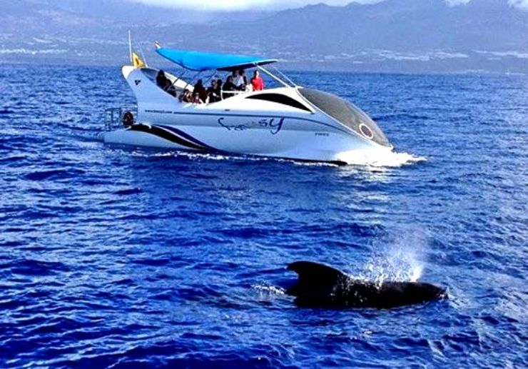 Spot dolphins and whales in La Palma