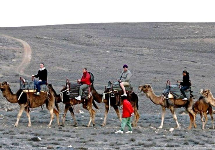 Camel safari tour in Lanzarote