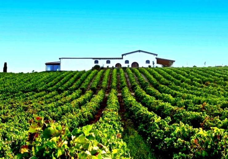 Audarya Cellar vineyard