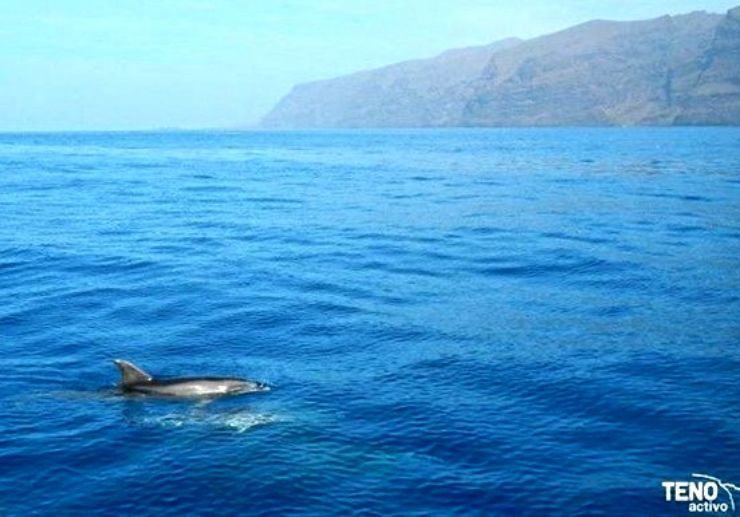 Spot dolphins and whales in Los Gigantes