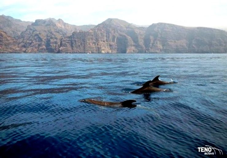 Tenerife whale watching and kayaking combo