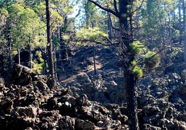 Explore Tenerife forest via quad adventure