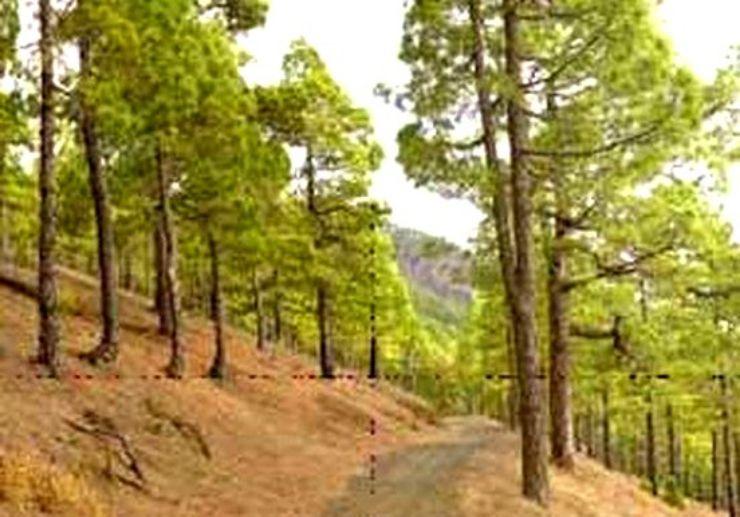 La Palma pine forest buggy tour