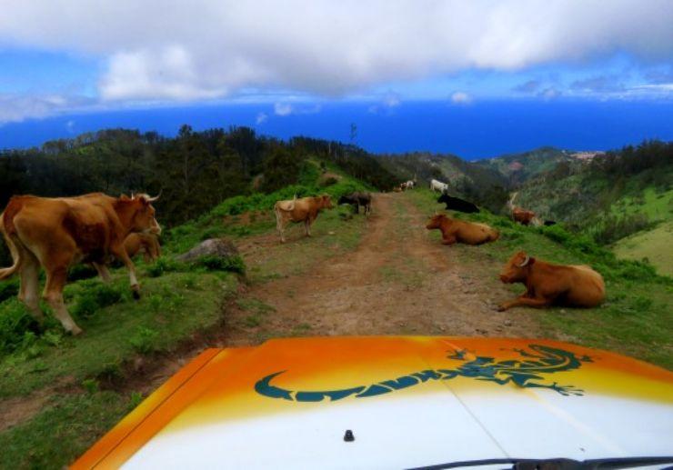 Spot form animals during jeep safari tour