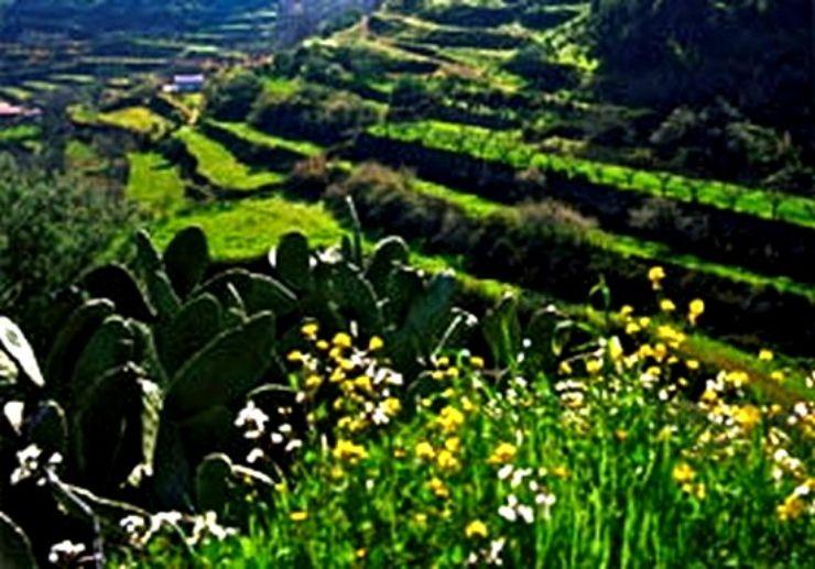 Amazing greeneries in center Gran Canaria
