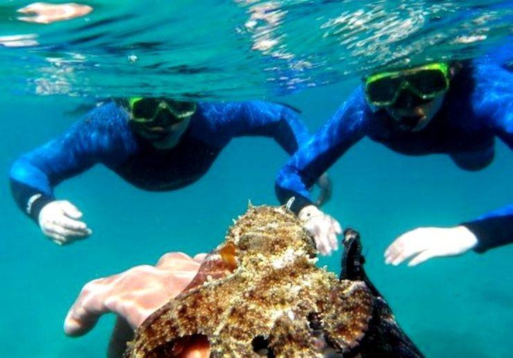 Boat snorkelling tour in Fuerteventura
