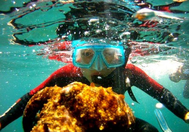 Snorkel with a boat in Fuerteventura