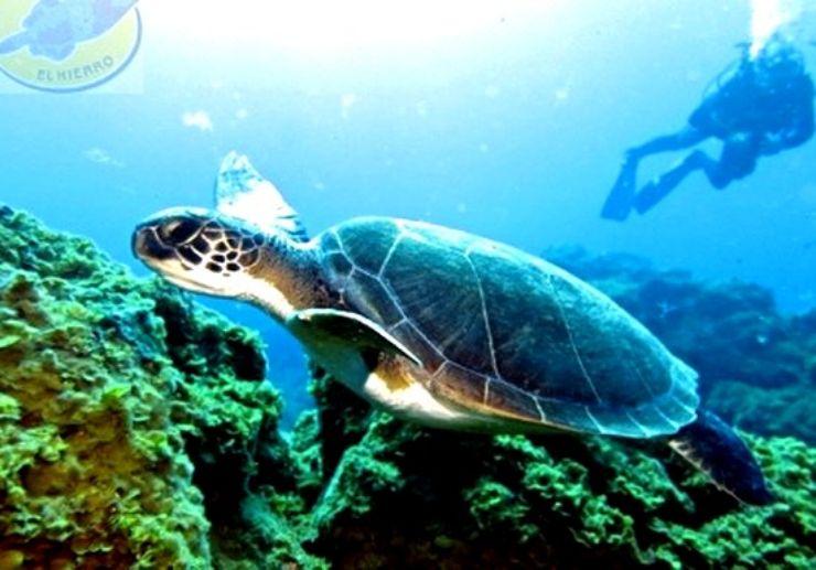 See turtles while diving in El Hierro