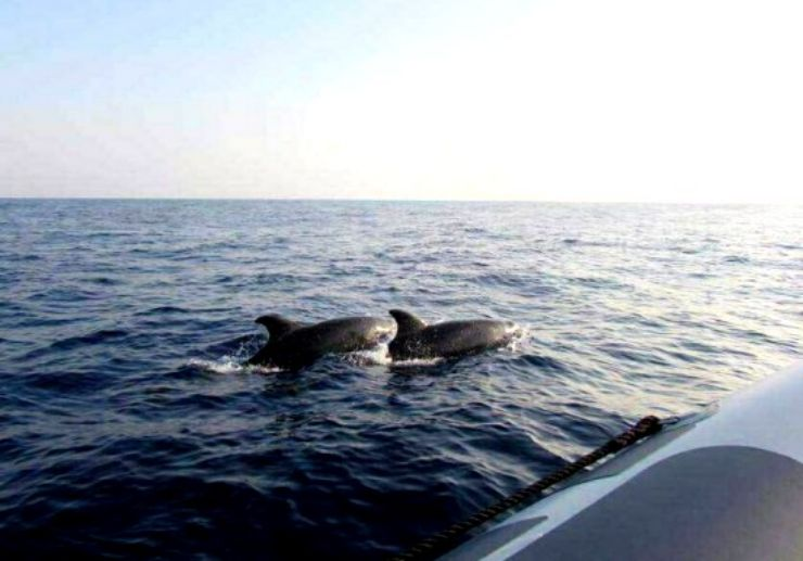 Dolphin spotting in Mallorca