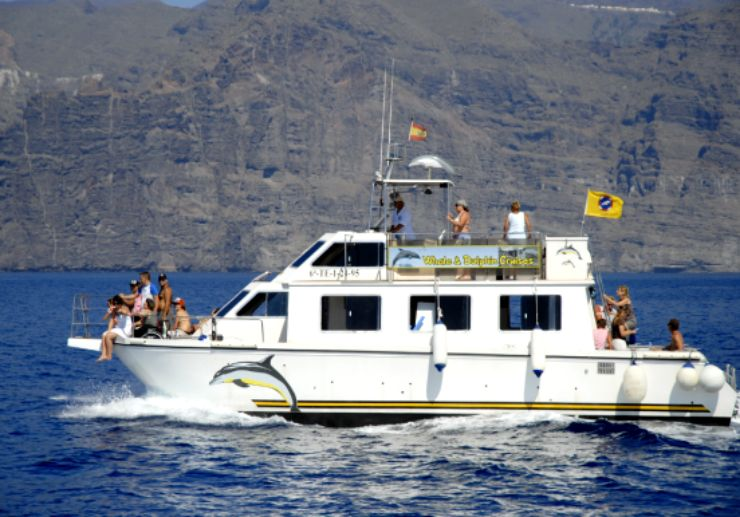 dolphin whalewatching los gigantes